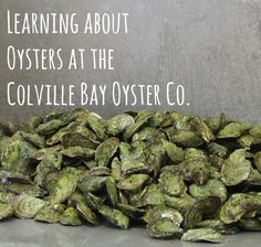 Life on a Canadian Island: Learning about Oysters at the Colville Bay Oyster Company