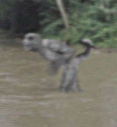 Figure Photographed in River - I'm not even sure where this photograph comes from, I mean geographically, but I think it comes from within the United States. It seems some are suggesting it is the Lizard man of Bishopville, but I'm not sure about that. The Bishopville lizard man is said to be some type of reptilian cryptid from South Carolina and it has been well researched and documented.