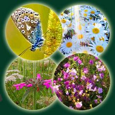 Sensory Garden Plants; great website for explanation of sensory garden. A sensory garden is a carefully designed planting area, where plants are grown which please all five of the senses; sight, touch, sound, scent and taste.
