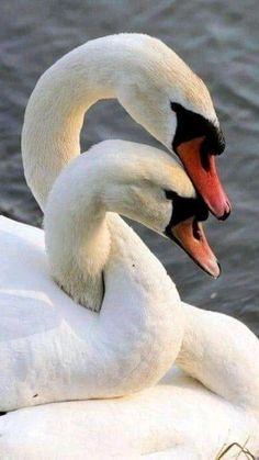 Bird Pictures, Funny Animal Pictures, Cute Pictures, Animals And Pets, Funny Animals, Cute Animals, Rock Animals, Exotic Animals, Beautiful Creatures