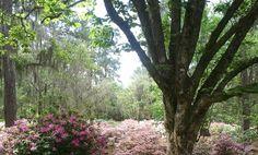 Maclay Gardens in Tallahassee, Florida Florida Gardening, Tallahassee Florida, Pastel Shades, This Is Us, Exotic, Heaven, Romance, Gardens, Sky