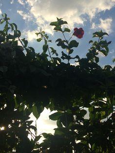Céu lindo céu