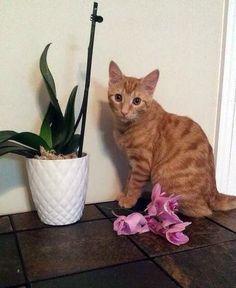 Un Chat qui a fait une Grosse Bêtise !!