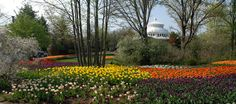 The Flower Blooms are early this year at  Cincinnati Zoo and Botanical Garden!  Can't wait!