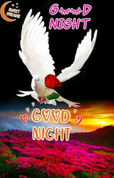 Good Night Images For WhatsApp Good Night For Him, New Good Night Images, Romantic Good Night Image, Lovely Good Night, Good Morning Beautiful Pictures, Good Night Sweet Dreams, Good Night Quotes, Morning Quotes, Good Morning Roses