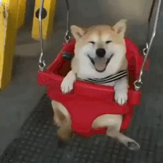 This dog is very happy that he is riding a swing #dog #joy #swing