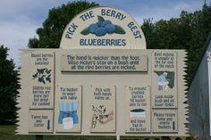 Pick Your Own Blueberries Near Overland Park, Kansas