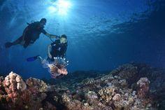 Diving off Reunion Island