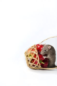 Rat and vegetables. - Decorative rat and wicker basket with a vegetables.