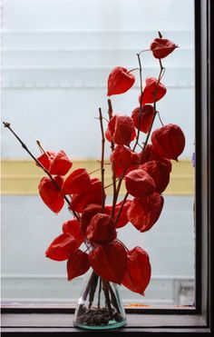 Chinese lantern flowers. Also called Japanese lantern. Hozuki are very popular in Japan.