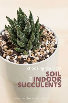 How to choose the right soil for succulent container gardens