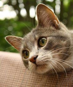 本日の美人猫vol.114 « 猫ジャーナル