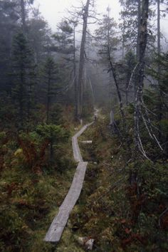 Bog path in Maine on the Appalachian Trail near Fourth Mountain.