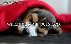 Watching your pet sleep