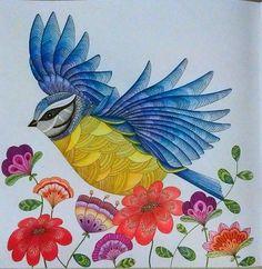 Animal Kingdom Colouring book