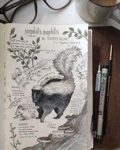 """The Striped Skunk"" (L. Mephitis mephitis) Loved drawing this species for the…"