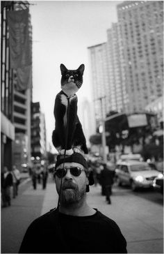 Cat on top