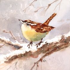 Wren aquarelle - oiseau Original peinture 7 x 7 pouces hiver