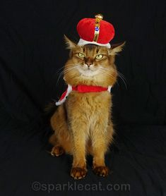 Not every cat can wear the crown! More photos at the link. #cats #funnycats #royalty