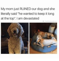 """Mom, Dog, and Wanted: My mom just RUINED our dog and she   literally said """"he wanted to keep it long   at the top"""". I am devastated   @ theblessedone"""
