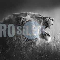 Professional Photography and photographic art gallery Interior Photography, Professional Photography, Monochrome, Leo, Art Gallery, Animals, Image, Animales, Art Museum