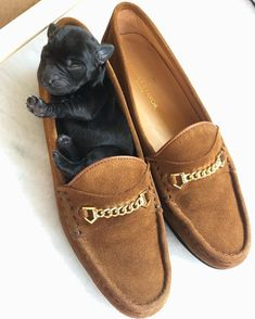 Fairfax And Favor, Beautiful Horses, Loafers Men, Cute Cats, Perfect Fit, Espadrilles, Oxford Shoes, Dress Shoes, Chanel