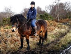 In the past, Exmoors were used as pit ponies. Ponies not kept in semi-feral conditions are used for a variety of activities including showing, long-distance riding, driving and agility. The breed's hardiness makes it suitable for conservation grazing, and it contributes to the management of many heathland, chalk grassland and other natural pasture habitats, as well as to the conservation of Exmoor itself. Hawkwell Versuvius - Holtball Exmoor Pony Stud 2012 - The Exmoor Pony Club