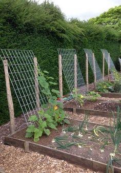 idea for squash, zucchini, cucumbers … – Plants and small vegetable garden – – diy garden landscaping Backyard Vegetable Gardens, Veg Garden, Vegetable Garden Design, Garden Trellis, Edible Garden, Outdoor Gardens, Summer Garden, Diy Trellis, Bean Trellis