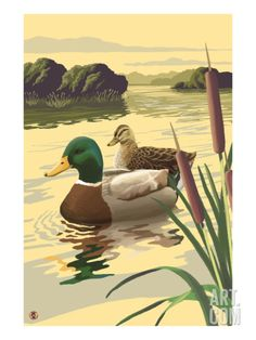 Mallard Ducks Art Print by Lantern Press at Art.com