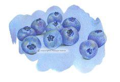 Blueberries  by Koosje Koene Illustrations - koosjekoene.nl