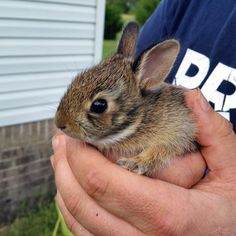Weeding my flowerbed, and found a couple of these little guys hiding in the grass (Source: http://ift.tt/1N50vDL)