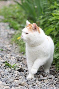 さんぽ - かご猫 Blog