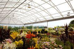 Dobbies Garden World - Fordingbridge Canopies & Buildings Steel Canopy, Canopies, Dobby, Garden Centre, Walkways, World, Plants, Buildings, Projects