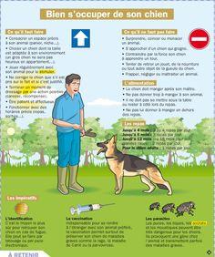 Fiche exposés : Bien s'occuper de son chien