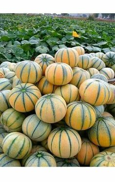 Fruits And Vegetables Pictures, Vegetable Pictures, Fresh Fruits And Vegetables, Fruit And Veg, Organic Vegetables, Fruit Tree Garden, Fruit Plants, Fruit Trees, Eden Foods