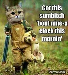Cute Funny Animal Pictures Especially for Kids. Funny Photos of Dog, Cat and Other Cute Animals, See Funny Animal Pictures with Captions Free Funny Animal Memes, Funny Cat Videos, Cute Funny Animals, Funny Animal Pictures, Cat Memes, Funny Cute, Funny Images, Cute Cats, Top Funny