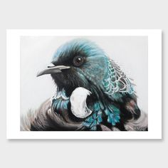 Margaret Petchell : Aubrey the beautiful Tui (native bellbird of NZ) Duck Egg Blue Artwork, Words On Canvas, New Zealand Art, Nz Art, Ship Art, Animal Tattoos, Woodblock Print, Photographic Prints, Beautiful Birds