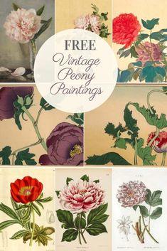 Vintage Flower Prints, Vintage Flowers, Botanical Flowers, Botanical Prints, Flowers Garden, Exotic Flowers, Purple Flowers, Peony Illustration, Flower Illustrations