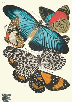 Красивые рисунки бабочек, жуков и других насекомых. Смотришь на эти изображения и хочется в рамку и на стенку, как старинную гравюру) Непаханное поле для колористов) и для нас, дизайнеров, декораторов. Для всех кто работает с цветом) удивительные сочетания) из которых можно составить свою цветовую…
