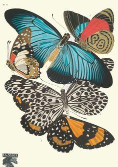 Papillons : vingt planches en phototypie coloriees au patron | NYPL Public Gallery