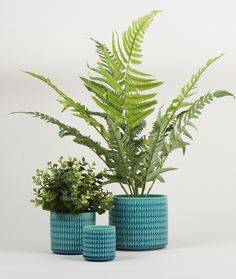 Set Of Three Teal Ceramic Pots - Trouva