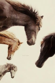 Horses by Gígja Einars