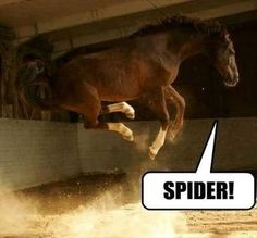"Horse Jumping With All Four Feet in the Air  Caption reads, ""Spider!"""