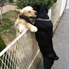 Not just neighbors but also best friends