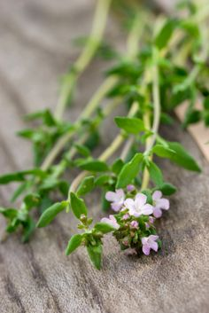 Thyme has long been known as an expectorant, which makes coughs more productive (that is, it helps clear out your lungs faster so you feel better sooner). You can brew a thyme herbal tea by steeping two teaspoons of fresh thyme in a cup of boiling-hot water for 10 minutes. Or, make a thyme steam bath...