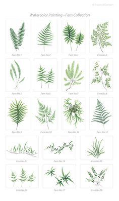 Watercolor Flowers Discover Fern Watercolor Print Set - Any FOUR Fern Art Botanical Prints / OR Tropical Decor Leaves Wall Art Botanical Drawings, Botanical Art, Botanical Illustration, Framed Botanical Prints, Watercolor Leaves, Watercolor Print, Watercolor Paintings, Tattoo Watercolor, Leaf Paintings