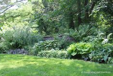 The shade garden is overhung by a large flowering cherry tree. Planted along the brick wall were various Ferns and Hostas. Beyond the wall is another 20 ...