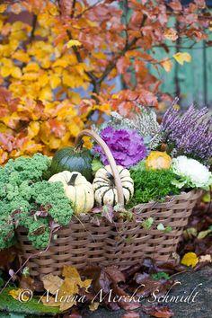 Blomsterverkstad: 5 sätt att dekorera med pumpor