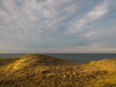Golden Dune-Dionis A5565 Web.jpg