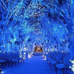 blue ferns winter wonderland theme with seating,  ferns , white and gold theme with blue lighting and dry trees